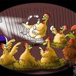 Entertainer im Hühnerstall